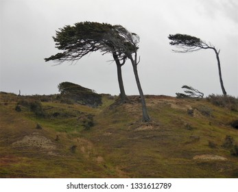 The patagonia's wind is so strong that bents multiple trees of the area
