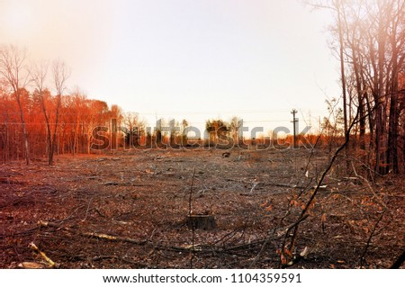 A patch of land at sunset after being clear cut of trees.