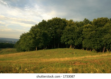 a patch of trees on a large clearing