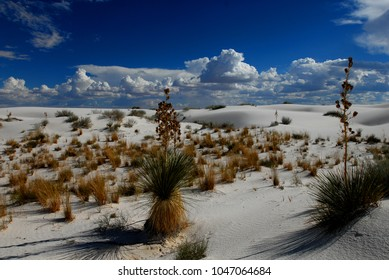 A patch of vegetation growing in White Sands National Monument, with white puffy clouds and blue sky as the background.