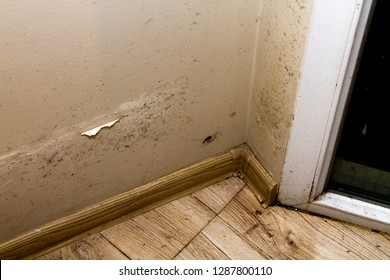 Patches of damp and mold growing on a wall in an apartment.