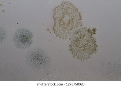 Patches of mold and damp on the ceiling.