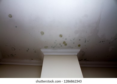 Patches of mold forming on the ceiling in an apartment, damp walls.