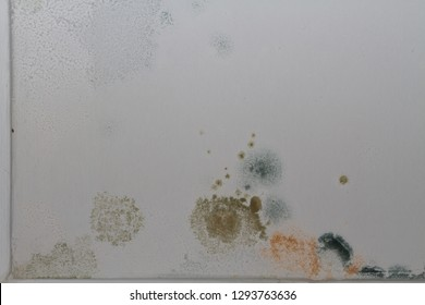 Patches of mold on a white ceiling.