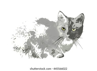 Patchy Sketched Cat