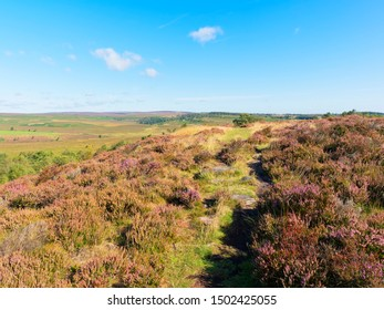 The path across a heather covered Birchen Edge slopes down to the flat moorland below.