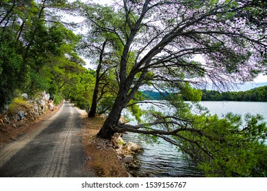 The path along the Great Lake (Veliko jezero) in Mljet National Park on Mljet island, Croatia.