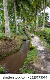 Path along the rice paddies in Ubud, Bali, Indonesia. The town is located amongst rice paddies and steep ravines in the central foothills of the Gianyar regency