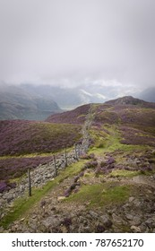 Path alongside barbwired fence leading to valley covered with purple heather England