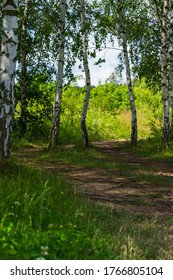 path amidst birch trees in the forest with roots on the ground
