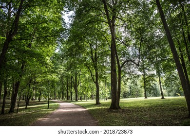 path among green trees in the park close-up