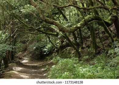 A path in the Anaga rural park in Tenerife island in the Canaries