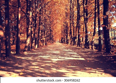 The path in the autumn forest - Shutterstock ID 306958262