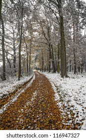 a path in an autumn forest with first snow