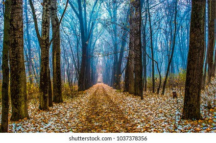 Path in autumn forest landscape