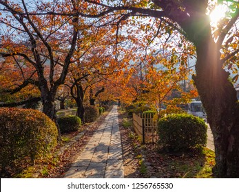 Philosopher's path in autumn in the morning light