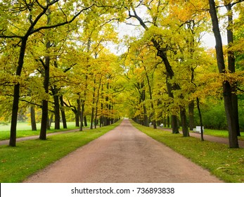 Path in the autumn Park going forward. Walk in the fresh air on the road near tall trees