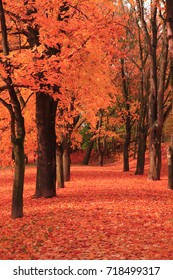 path in the autumn park as seasonal background
