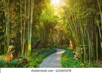 Path in bamboo forest brove in Wangjiang Pavilion (Wangjiang Tower) Wangjianglou Park. Chengdu, Sichuan, China