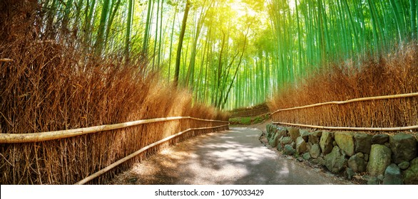 Path in bamboo forest in Kyoto, Japan. Woods in Arashiyama destrict