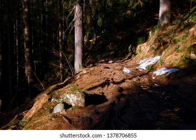 a path in the bavarian forest