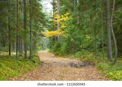 Path in a beautiful early autumn forest