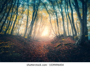 Path in beautiful forest in fog at sunrise in autumn. Colorful landscape with enchanted trees with orange and red leaves. Scenery with trail in dreamy foggy forest. Fall colors in october. Nature