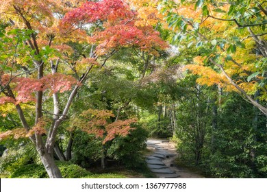 A Path in between colorful trees in autumn at Koko-en Garden in Himeji, an Edo Style Japanese Garden located next to the famous Himeji Castle in Hyogo Prefecture, Japan.