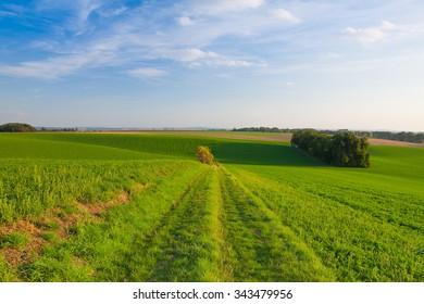 Path between green fields, Moravia, Czech Republic