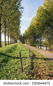 Path between rows of trees in a Dutch rural landscape. The photo was taken in the Oranjepolder in Oosterhout, North Brabant. It was a sunny day in the fall season.