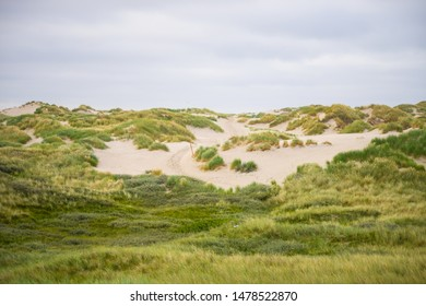 Path between the soft dunes of Amrum
