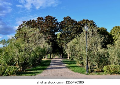 A path between trees in park