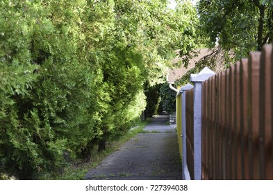Path between wooden fence and green trees. Have a walk.