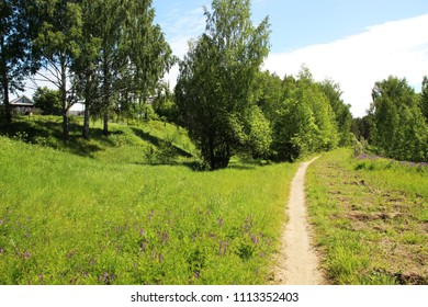 The path in the birch Grove in the summer sunny day