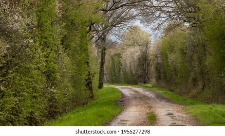 Path in the bocage of northern France. Path between two hawthorn and blackthorn hedges. Shrubs with white flowers in spring, young green leaves and cloudy sky. Awakening nature after winter