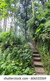 A path in the cloud forest at the Recinto del Pensamiento nature reserve near Manizales, Colombia.