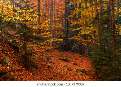 Path in a Colorful Autumn Forest