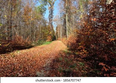 Der Weg ist komplett mit Blättern am Waldrand bedeckt.