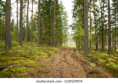 Path in a coniferous wood