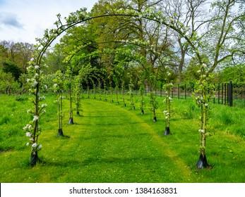 Sidste nye Espalier Fruit Trees Images, Stock Photos & Vectors | Shutterstock CM-88