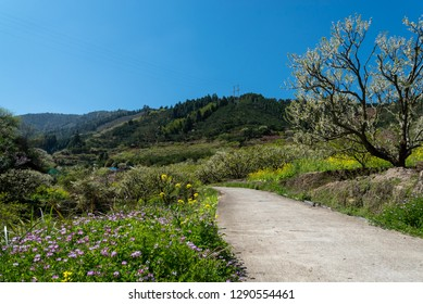 The path is covered with peach blossoms , pear blossoms, Astragalus sinicus L and rapeseed flowers,which are particularly beautiful under the sun, in Shaoguan Guangdong China