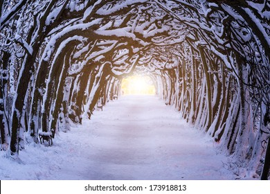 Path in dark forest at winter time