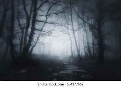 path in a dark and scary forest
