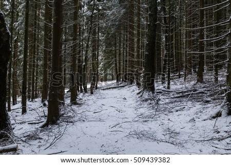 path dark winter forest stock photo edit now 509439382 shutterstock