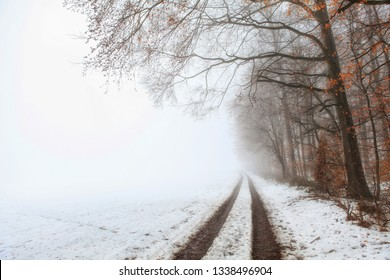 Path at the edge of the forest with snow and fog early in the morning in winter
