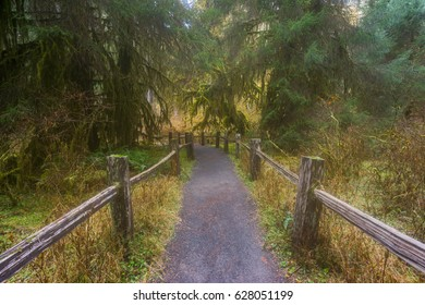 A path in the fairy green forest. The forest along the trail is filled with old temperate trees covered in green and brown mosses. Hoh Rain Forest, Olympic National Park, Washington state, USA