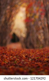 A path and fallen leaves of colored leaves