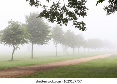 Path in a field or park with row or trees in morning fog or mist.