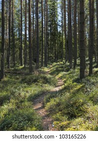 A path in a Finnish forest in may.