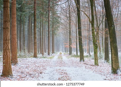 path with first snow this winter in the Veluwe forest near Apeldoorn